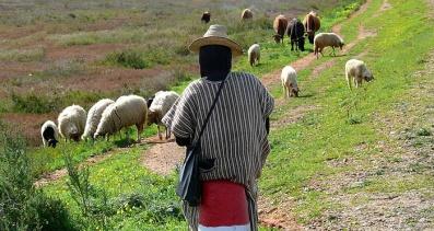 Histoire d'un berger de Kabylie pendant la guerre d'Algérie (mars 2007)